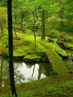 Zen temples in Kyoto Japan pixels Moss Garden, Garden Trees, Beautiful World, Beautiful Places, Japan Travel Guide, Green Mountain, Mother Earth, Garden Landscaping, Garden Design
