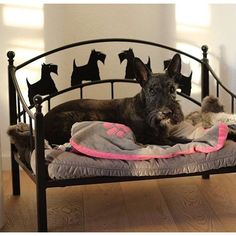 Now THIS is a Scottie throne fit for a princess!