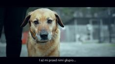 Dobre wyjście dla psa to Ty #kampaniaspołeczna #schronisko #pies #dog #puppy #social
