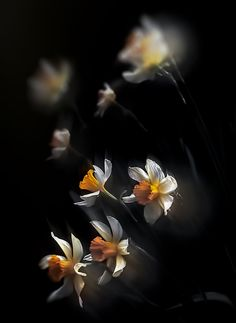From Spring de Lucian Olteanu sur Art Limited