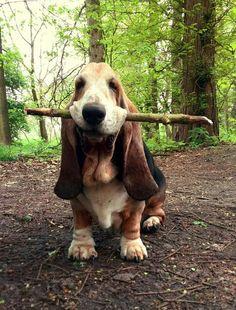 Mister Woof Loves...