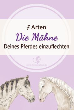 Braiding mane in the horse (tournament braids, Spanish braid, mane net, cross … – Art Of Equitation Connemara Pony, Horse Riding Tips, Horse Mane, All About Horses, Hobby Horse, Horse Training, Animals And Pets, Equestrian, French Braid