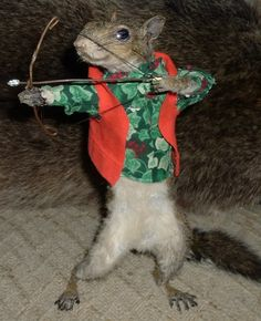 Crazy squirrel pictures toplist funniest character