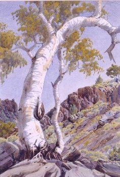 Albert Namatjira Ghost Gum, MacDonnell Ranges, Central Australia (c. watercolour over pencil × cm (image) × cm (sheet) Indigenous Australian Art, Indigenous Art, Australian Artists, Aboriginal Artwork, Aboriginal Artists, Aboriginal Education, Indigenous Education, Watercolor Trees, Watercolor Paintings
