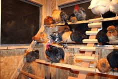 Chickens Need A Good Roost To Sleep