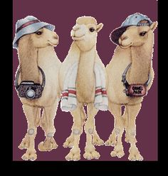 Camel Hump Day Photo: This Photo was uploaded by luckypak. Find other Camel Hump Day pictures and photos or upload your own with Photobucket free image . Wednesday Morning Images, Wednesday Quotes And Images, Happy Wednesday Pictures, Wednesday Hump Day, Wednesday Greetings, Happy Wednesday Quotes, Wednesday Humor, Wonderful Wednesday, Wednesday Coffee