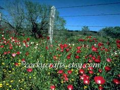 Texas wildflower seeds by Corkycrafts on Etsy, $3.00
