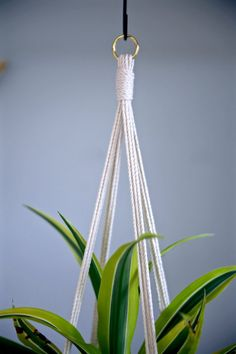This macrame plant hanger is made with 3mm natural white cotton rope, with four simple strands, hung by a small brass ring. It will fit a variety of pot shapes and sizes. Would make a lovely gift!  Measures approx. 45 total length. Hanging length will vary depending on the size and shape of pot used. Shown here with 8 diameter pots.  This item is MADE TO ORDER! Please allow 1-3 business days for production.  ✦ Shop Plant Hangers ✦ www.etsy.com/shop/BermudaDream?section_id=18034900  ✦ Shop…