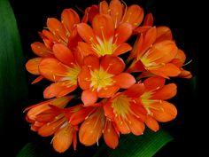 Longwood Garden Flower #7 by jefg99, via Flickr