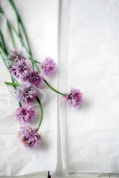 Find images and videos about flowers, purple and spring on We Heart It - the app to get lost in what you love. Fresh Flowers, Purple Flowers, Beautiful Flowers, Buy Flowers, Summer Flowers, Simply Beautiful, Beautiful Things, Chive Blossom, Bloom