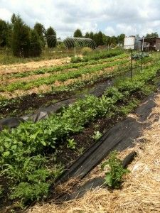 Organic gardening, vegetables to plant in a Fall garden.