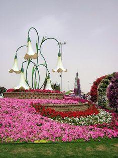 Curious Places: Dubai Miracle Garden (Dubai/ United Arab Emirates)