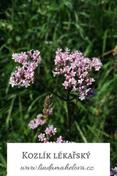 Herbalism, Gardening, Herbal Medicine, Lawn And Garden, Horticulture