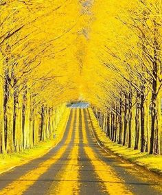 New fall nature photography trees pathways Ideas Autumn Scenery, Autumn Nature, Amazing Photography, Nature Photography, Photography Jobs, National Geographic Photo Contest, Nature Adventure, Adventure Quotes, Colorful Trees