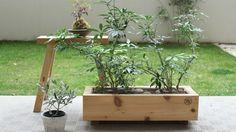 植物のある暮らし YARD植栽ワークショップレポート | URBAN RESEARCH DOORS