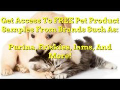 Iams Cat Food Coupons | Pet Guide Canned Cat Food, Dry Cat Food, Purina One Dog Food, Senior Cat Food, Cat Food Coupons, Chicken Cat, Cat Food Brands, Cat Diet, Pet Dogs