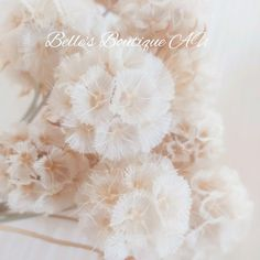 Dried White Scabiosa Pods Starflower Flowers White Preserved | Etsy