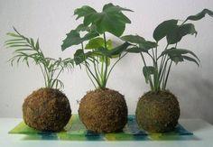 Unique kokedama Ball Ideas for Hanging Garden Plants selber machen ball House Plants, Hanging Plants, Pretty Plants, Plants, Small Gardens, Kokedama, Mini Garden, Hanging Garden, Flowers