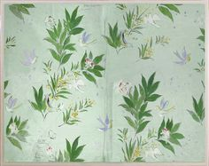 Doves from the Paule Marrot Collection, Natural Curiosities