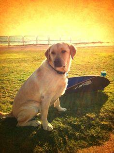 #ehlerslongboards #ehlers #longboarding #longboards #longboard #dog
