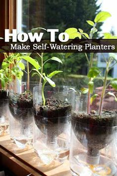 How To Make Self-watering Seed Starter Pots. We are excited to share with you this recycling project. It is truly green and fun. You do not only recycle those plastic water bottles, but also make self-watering seed starter pots for you to start your herb Plastic Bottle Planter, Reuse Plastic Bottles, Plastic Bottle Crafts, Self Watering Plants, Planting For Kids, Bottle Garden, Home Vegetable Garden, Organic Farming, Cool Plants