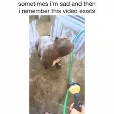 I Guarantee This Will Make Your Day Better 🥰🥰🥰 - cuuute - Hunde bilder Funny Animal Videos, Cute Funny Animals, Animal Memes, Cute Baby Animals, Funny Cute, Funny Dogs, Animals And Pets, Funny Pitbull, Dogs Pitbull