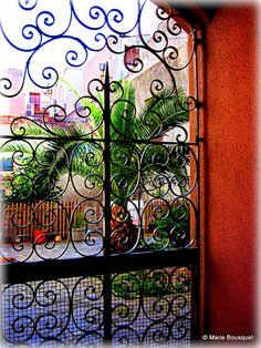 La cour au palmier derrière le portail en fer forgé by bleumarie