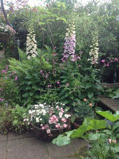 foxgloves - my favourits