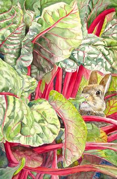 A baby bunny enjoys a meal of juicy leaves in the middle of a vegetable patch. All sizes available . Starts at 11x15 for 25.00  Copyright ,