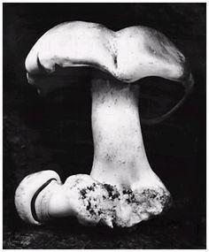 Edward Weston, 'Toadstool, 1931'  Edward Weston negative, Cole Weston print