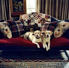 Is Lassie on??? Pinterest Lady Club