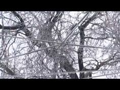 Ice Storm 2013 - About customers in Southern Ontario were without power when a massive weather system coated hydro wires, trees and everything else with ice on December Cooper's Hawk, Ice Storm, Canadian History, Over The Years, Yard, Snow, Outdoor, Bald Eagles, Trees