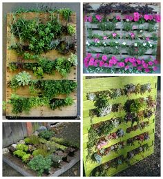Pallet Gardens have become very popular these days as people have always liked working in their gardens. Now, using a pallet is easy to make your own garden but also gives you a chance to recycle something that would otherwise be thrown away. All you will need for pallet gardening is an old wood p…