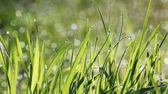 De gemeente Laren, Imkervereniging VBBN en Gewildgroei gaan de biodiversiteit in Laren bevorderen. Ze zetten daarom een speciale actie op touw.