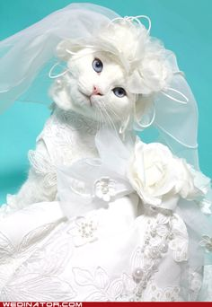 For the cat who has everything, and the cat owner who doesn't have human children, I present: A CAT WEARING A BRIDAL GOWN.