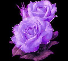 Animated wallpaper, screensaver for cellphone Black Flowers, Purple Roses, Pink Purple, Unique Flowers, Purple Haze, Gif Lindos, Ronsard Rose, Most Beautiful Black Women, Rose Violette
