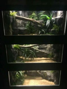 Reptile Habitat, Reptile House, Reptile Room, Reptile Cage, Animal Room, Animal House, Snake Cages, Snake Enclosure, Dog Boarding Kennels