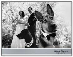 dog walking down wedding aisle Dog Wedding Attire, Dog Wedding Dress, Trendy Wedding, Wedding Pictures, Dream Wedding, Wedding Dresses, Wedding Ideas, Wedding Outfits, Diy Wedding