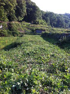 5/22 - 草刈り途中(30分くらい作業後)。後を振り返ってみる。