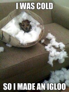 I was cold so I made an igloo.