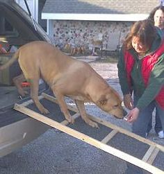 Over 50 plans to build a dog ramp, pet ramp or pet steps with these free plans. Dog ramp plans for both indoors and outdoors. Free dog ramp plans are fully customizable, so you can build the size and shape you need. Dog Ramp For Truck, Ramps For Trucks, Pet Ramp, Ramp For Dogs, Big Dogs, Large Dogs, Cheap Dog Crates, Dog Stairs, Dog Boarding Near Me