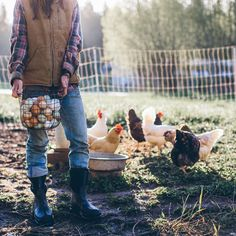 Lady farmer in jeans and flannel, gorgeous morning light and chickens in all colours! Lady farmer in