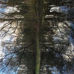 Mirror #nature #naturephotography #amsterdamsebos #amsterdam #rorschach #thisaintartschool