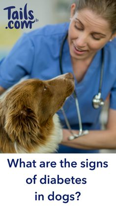 The symptoms of diabetes can be worrying, but knowledge is power. The Effective Pictures We Offer Dog Health Tips, Pet Health, Dog Care Tips, Pet Care, Big Dogs, Dogs And Puppies, English Dogs, Homemade Dog Toys, Dog Nutrition