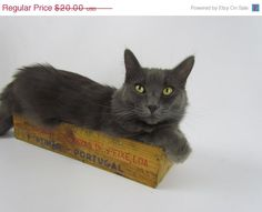 Vintage Wooden Anchovy Crate From Portugal For Decor, Garden Or Cat Bed