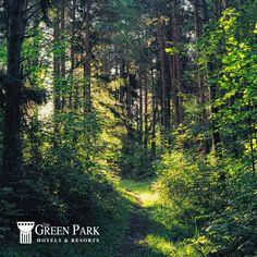 İstanbul'a yalnızca bir saat uzalıktaki The Green Park Kartepe Resort & SPA'ya gelerek kendinizi şehrin stresinden uzaklaştırabilir, yeşilin tonlarını ve yaban hayatını keşfedebilirsiniz.