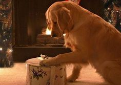 PetsLady's Pick: Cute Christmas Morning Puppy Of The Day ... see more at PetsLady.com ... The FUN site for Animal Lovers