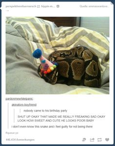 I personally don't really like snakes. But this one, is, how to say, funny ! Did you ever see a snake wearing a birthday hat ? And it's not even disturbing him ! I think this snake his very special ! Funny Animal Quotes, Funny Animal Pictures, Funny Animals, Cute Animals, Animal Humor, Happy Animals, Animal Pics, Animal Memes, Animal Food