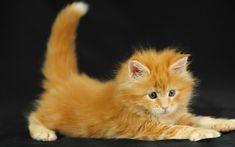 Like a tiny baby tiger!*