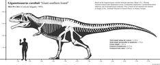 Spinosaurus, Legendary Creature, Prehistoric Creatures, Extinct, Skeletons, Fossils, Drawing Reference, Gabriel, Beast